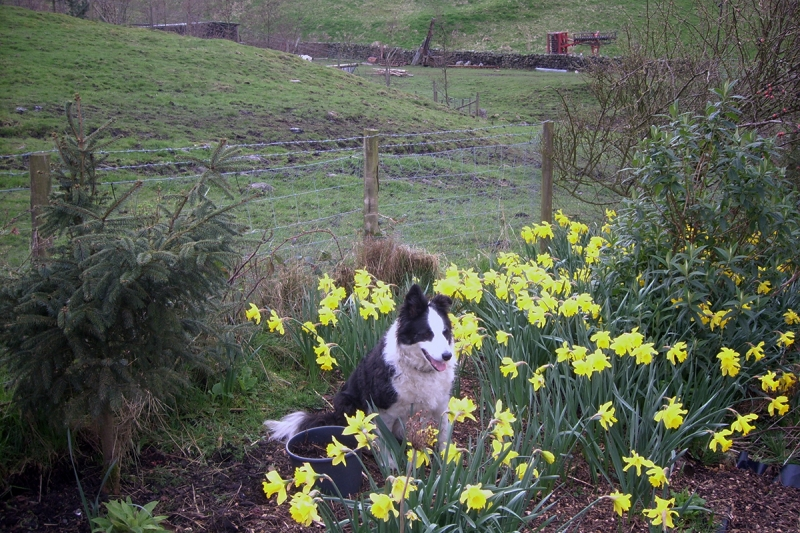 Our dog Bess in the garden