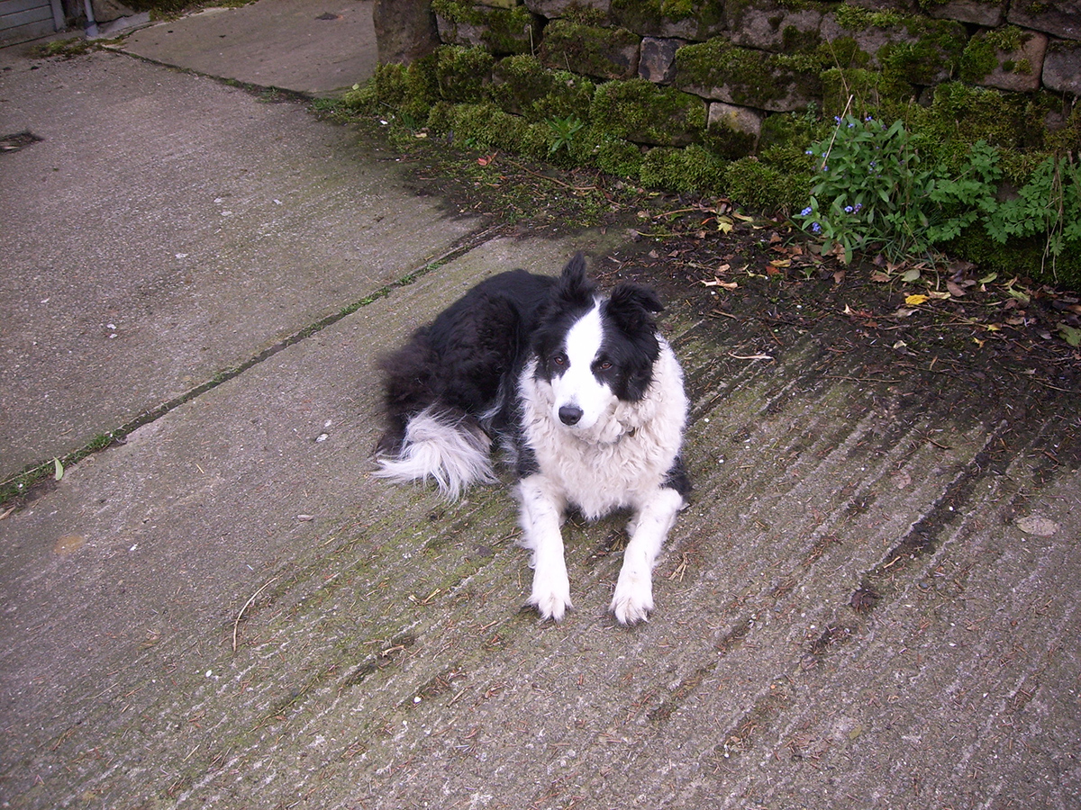 Our dog Bess